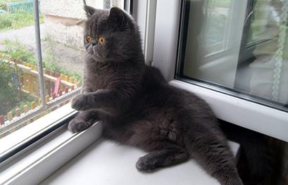 москитные сетки анти кошка